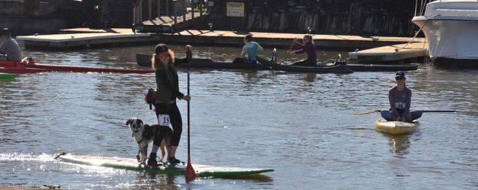Paddleboard Racing with your dog at 101 Surf Sports